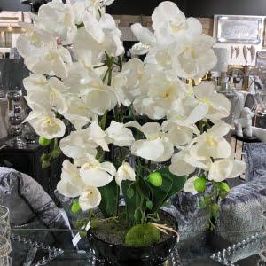 Faux White Orchid Plant