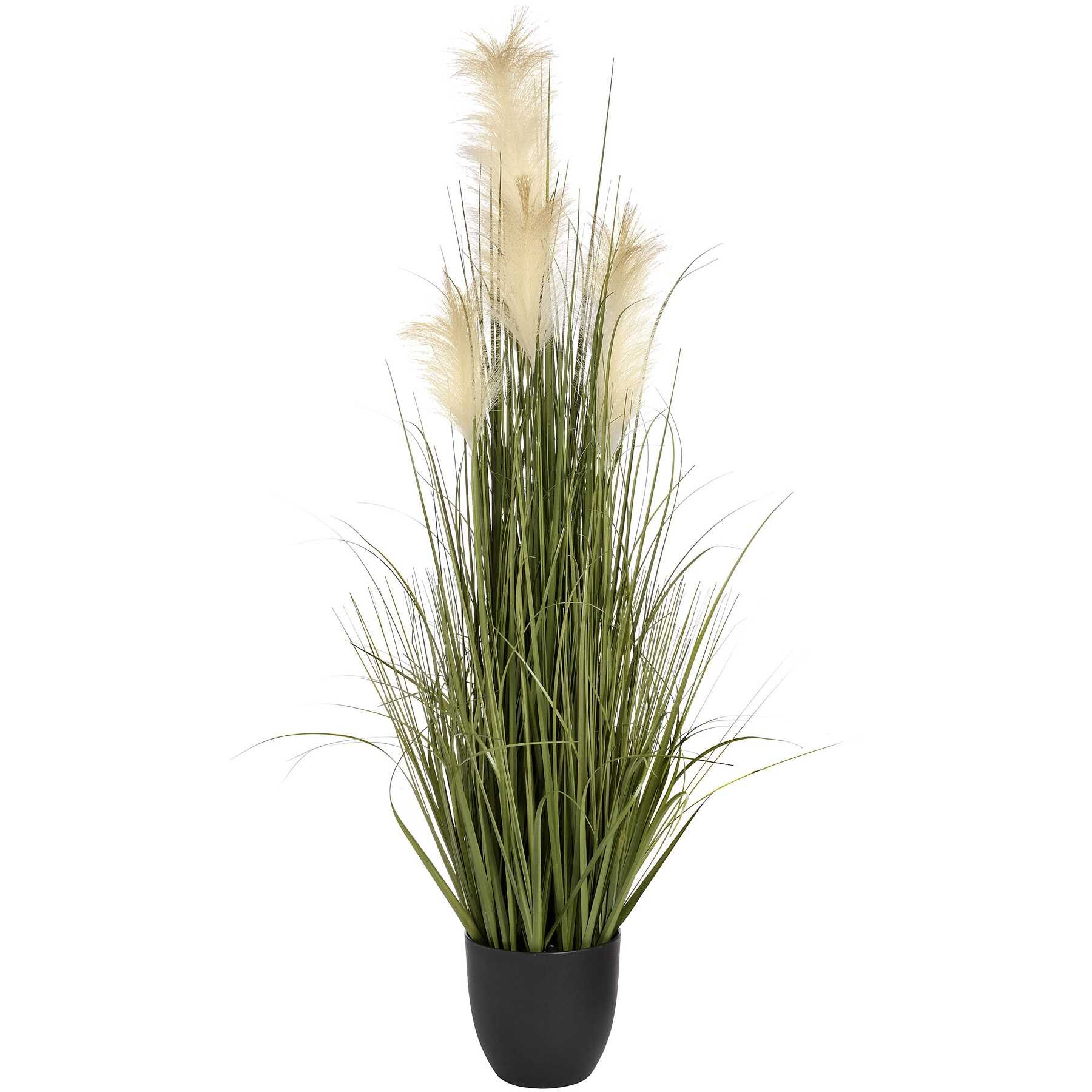 Honor Pampus Grass Bush