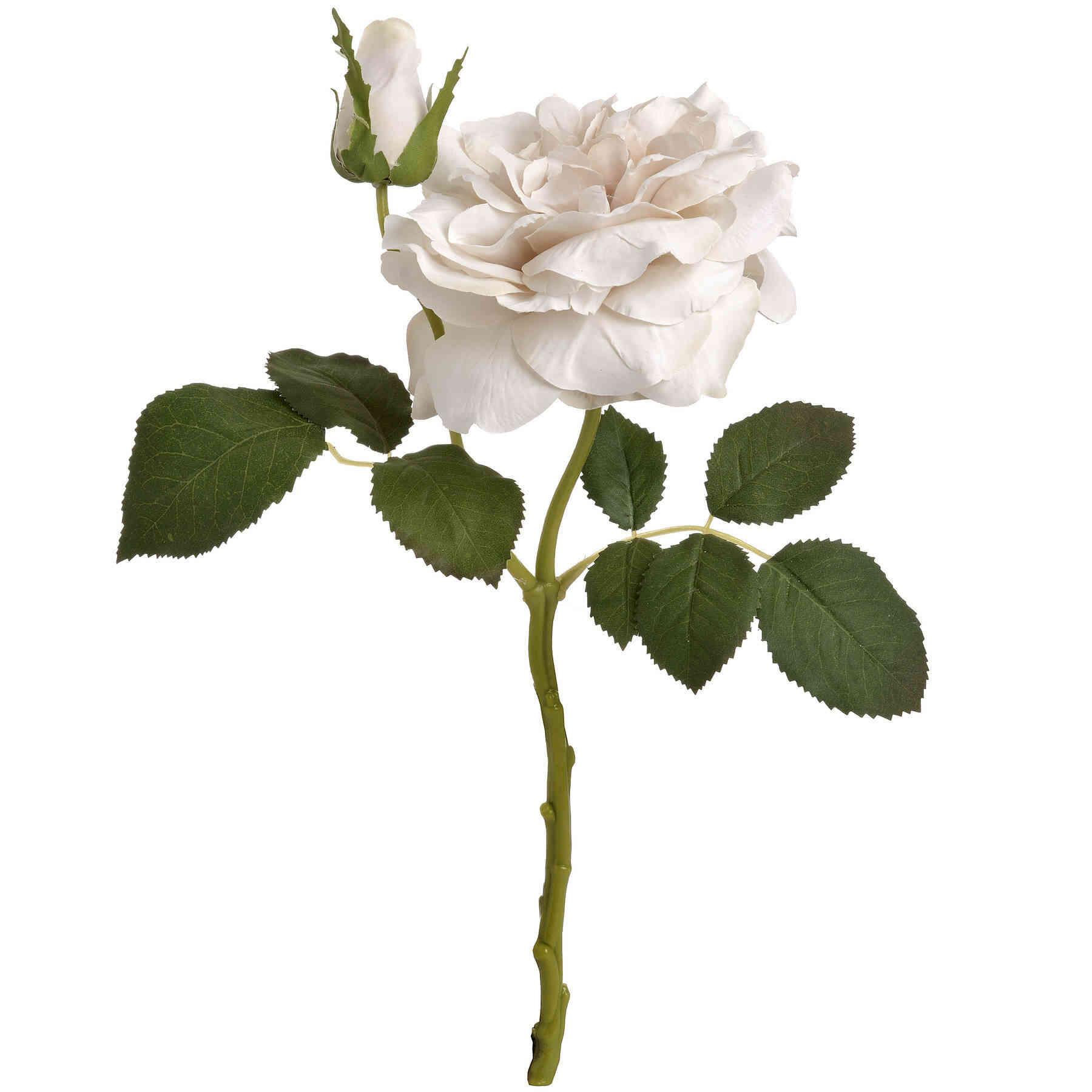 Honor White Short Stem Rose