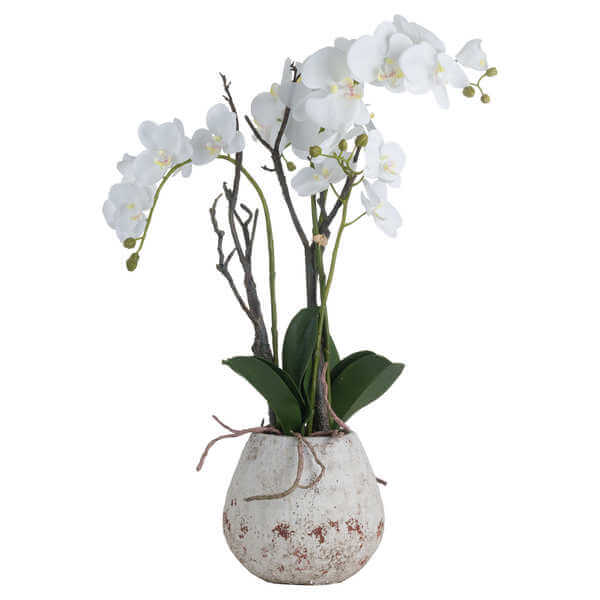 Honor Orchid in Stone Pot